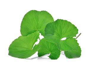 foglie di centella asiatica