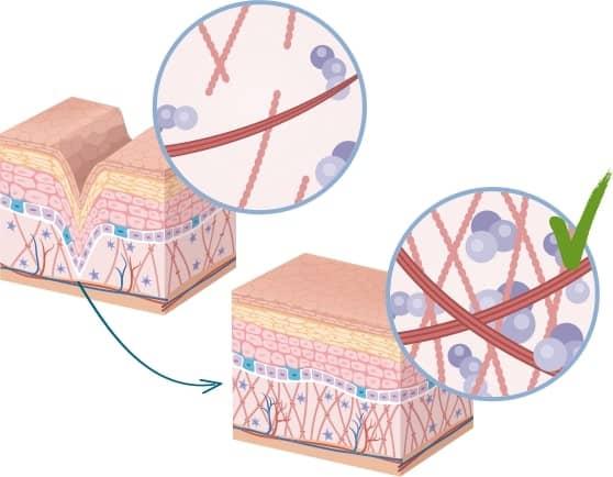 infografica degli effetti di vitaldermax sulla pelle